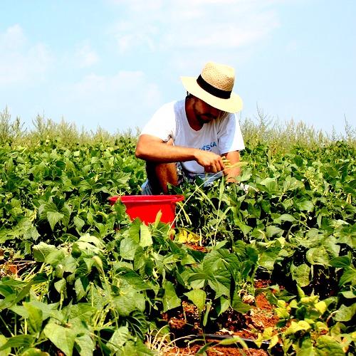 Jardiner améliore santé et vitalité